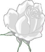 rose bullet